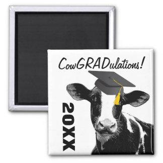 Vaca divertida de la graduación de la enhorabuena iman
