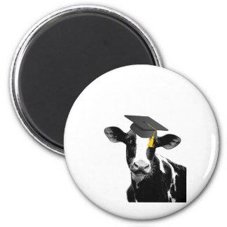 Vaca divertida de la graduación de la enhorabuena imán para frigorífico