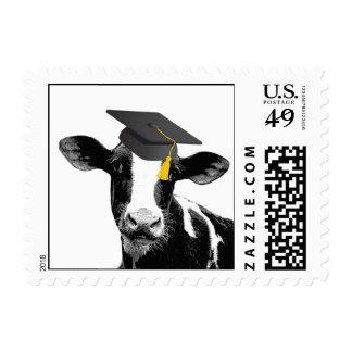 Vaca divertida de la graduación de la enhorabuena franqueo