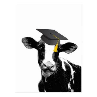 Vaca divertida de la graduación de la enhorabuena  postales