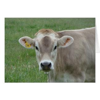 vaca dulce del jersey felicitación