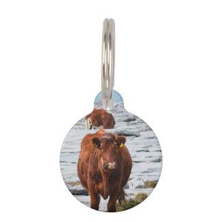 Vaca en Burren Identificador Para Mascotas