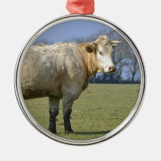 Vaca en campo adorno redondo plateado