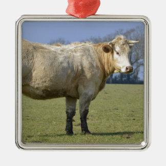 Vaca en campo adorno cuadrado plateado
