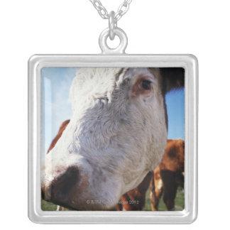 Vaca en el campo, primer colgante cuadrado