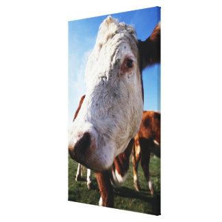 Vaca en el campo, primer impresion en lona