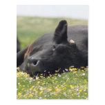 Vaca en flores tarjeta postal