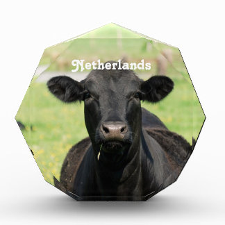 Vaca en Países Bajos
