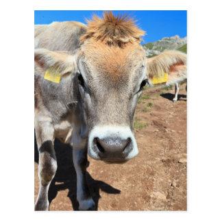 vaca en pasto alpino tarjeta postal