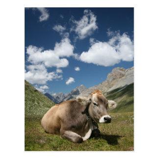 Vaca en pasto postal