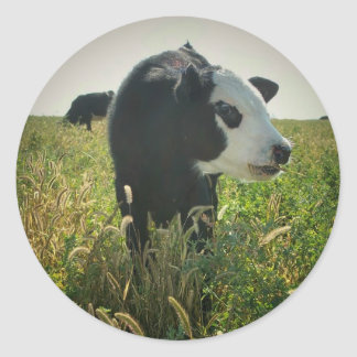 Vaca en pegatina del pasto