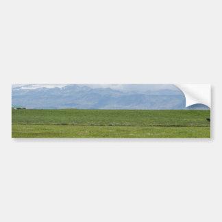 Vaca en un campo etiqueta de parachoque