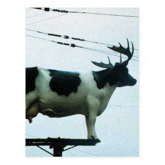 Vaca en un teléfono poste postales
