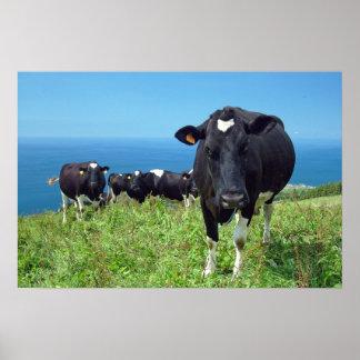 Vaca enfadada póster