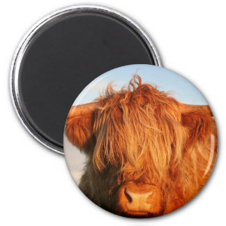 Vaca escocesa de la montaña - Escocia Imán Redondo 5 Cm