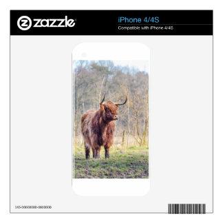 Vaca escocesa del montañés de Brown que se coloca Calcomanía Para El iPhone 4