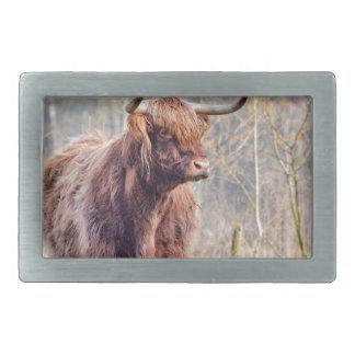 Vaca escocesa del montañés de Brown que se coloca Hebilla De Cinturon Rectangular