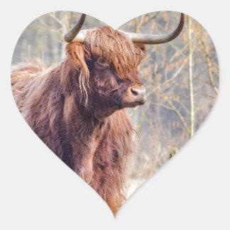 Vaca escocesa del montañés de Brown que se coloca Pegatina En Forma De Corazón