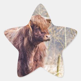 Vaca escocesa del montañés de Brown que se coloca Pegatina En Forma De Estrella