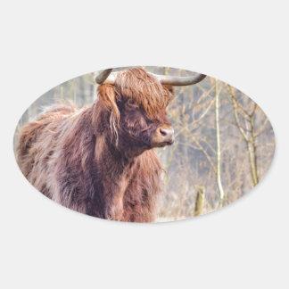 Vaca escocesa del montañés de Brown que se coloca Pegatina Ovalada