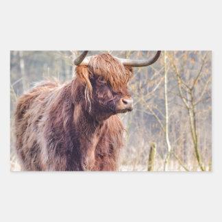 Vaca escocesa del montañés de Brown que se coloca Pegatina Rectangular