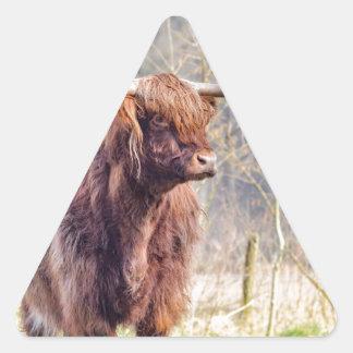 Vaca escocesa del montañés de Brown que se coloca Pegatina Triangular