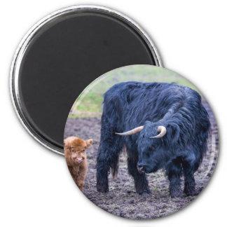 Vaca escocesa del montañés de la madre negra imán redondo 5 cm