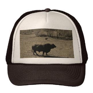 Vaca, foto negra del tono de la sepia del boletín gorras de camionero