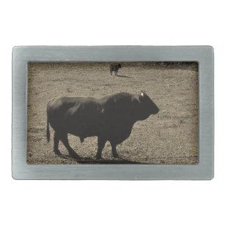 Vaca, foto negra del tono de la sepia del boletín hebilla de cinturón