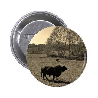 Vaca, foto negra del tono de la sepia del boletín pins