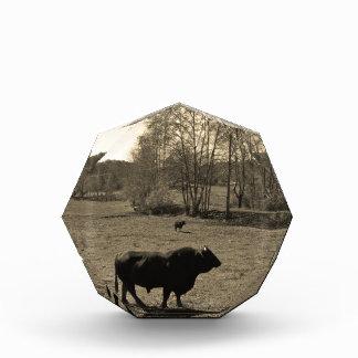 Vaca, foto negra del tono de la sepia del boletín