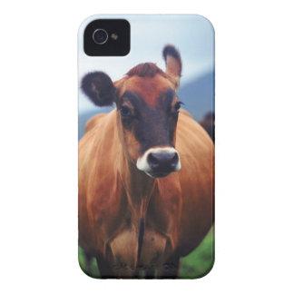 vaca iPhone 4 Case-Mate cárcasas