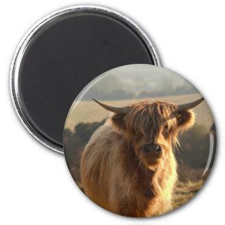 Vaca joven de la montaña imán de frigorífico