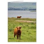 Vaca joven de la montaña por el lago escocés tarjetas