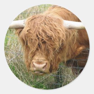 Vaca lanuda de la montaña pegatinas