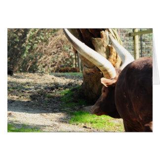Vaca larga del cuerno tarjeta de felicitación