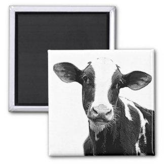 Vaca lechera - becerro blanco y negro de la lecher imán cuadrado