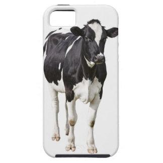 Vaca lechera (tauro del Bos) en el fondo blanco iPhone 5 Fundas