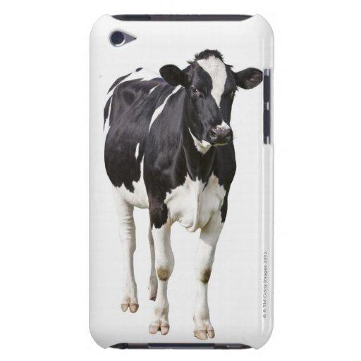 Vaca lechera (tauro del Bos) en el fondo blanco iPod Touch Cobertura