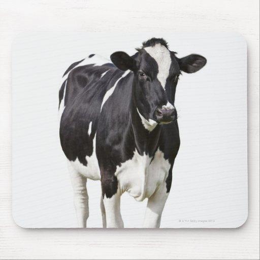 Vaca lechera (tauro del Bos) en el fondo blanco Tapete De Raton