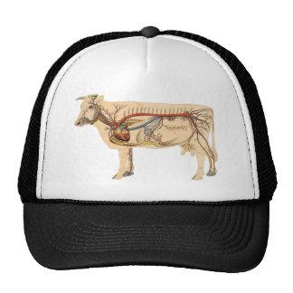 Vaca linda anatómica gorra