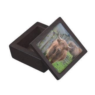 Vaca linda de la montaña por la cerca cajas de regalo de calidad