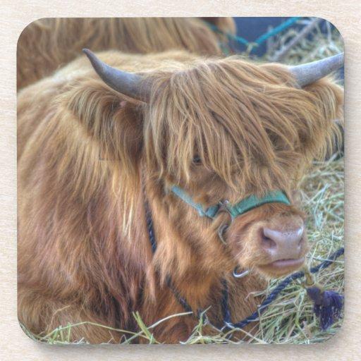 Vaca melenuda posavaso