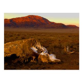 Vaca muerta en la postal de la puesta del sol
