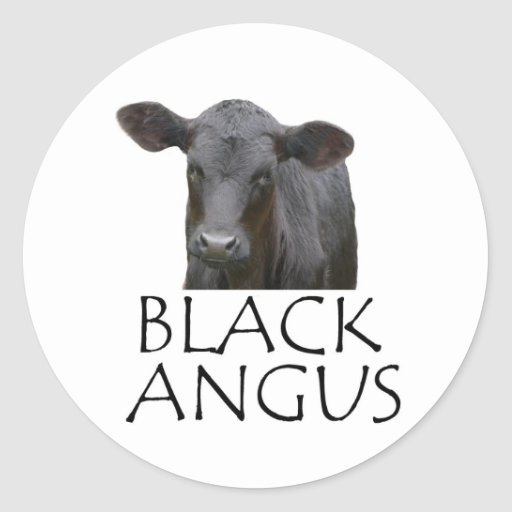 Vaca negra de Angus Pegatina Redonda