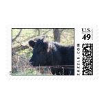 Vaca negra que mira fuera de la cerca sello