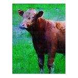 Vaca pintada de Brown Tarjetas Postales
