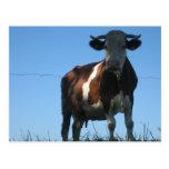 Vaca Postales