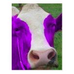 vaca púrpura postal