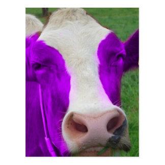 vaca púrpura postales